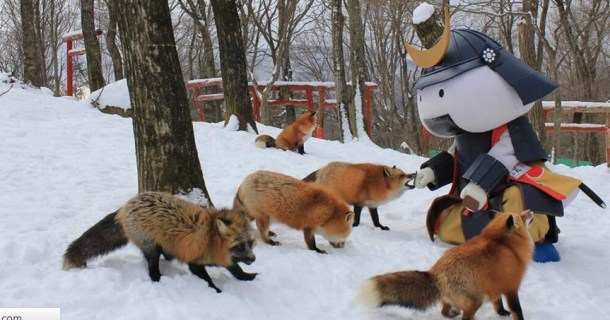 Japan A Fox Petting Zoo Retrenders